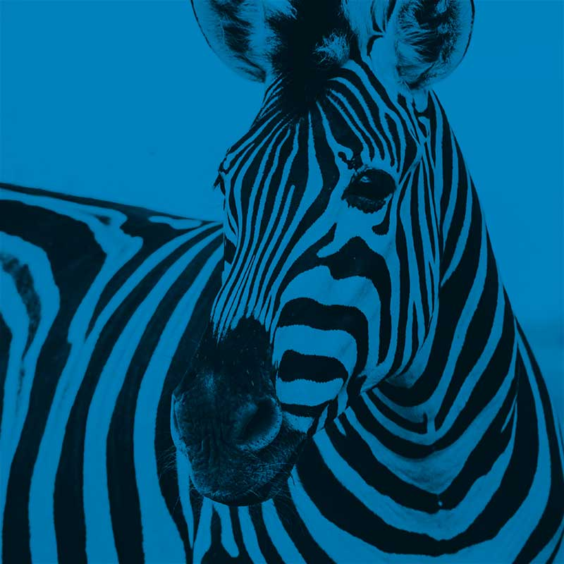 Blue Zebra Talent - Contact Image